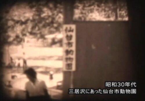 昭和30年代 宮城県仙台市 三居沢にあった仙台市動物園
