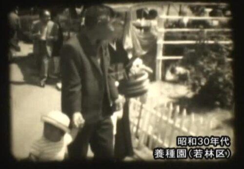 昭和30年代 宮城県仙台市若林区 バラ祭り