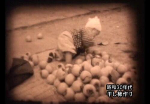 昭和30年代 宮城県白石市 干し柿作り