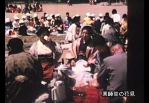 昭和40年代 宮城県仙台市宮城野区 薬師堂の花見